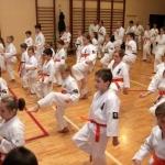Karatecy ARS Klub Kyokushinkai potwierdzili swoje umiejętności (27)
